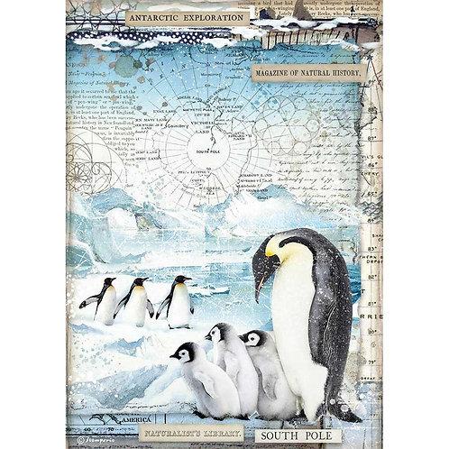 Stamperia - Arctic Antarctic Penguins - Rice Paper A4-Item #DFSA4479