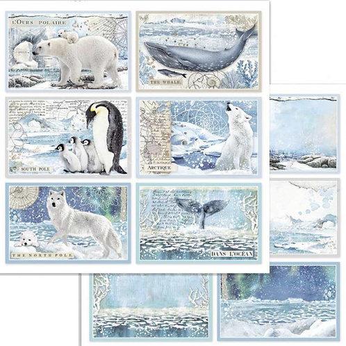 Stamperia-Arctic Antarctic Cards - 2 - 12x12 Single Sheets-Item #SBB732
