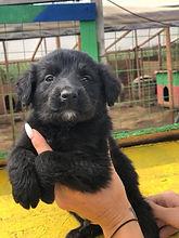 Barking Mad Dog Rescue puppy.jpg
