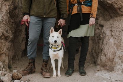 Couple brings dog To their desert elopement.