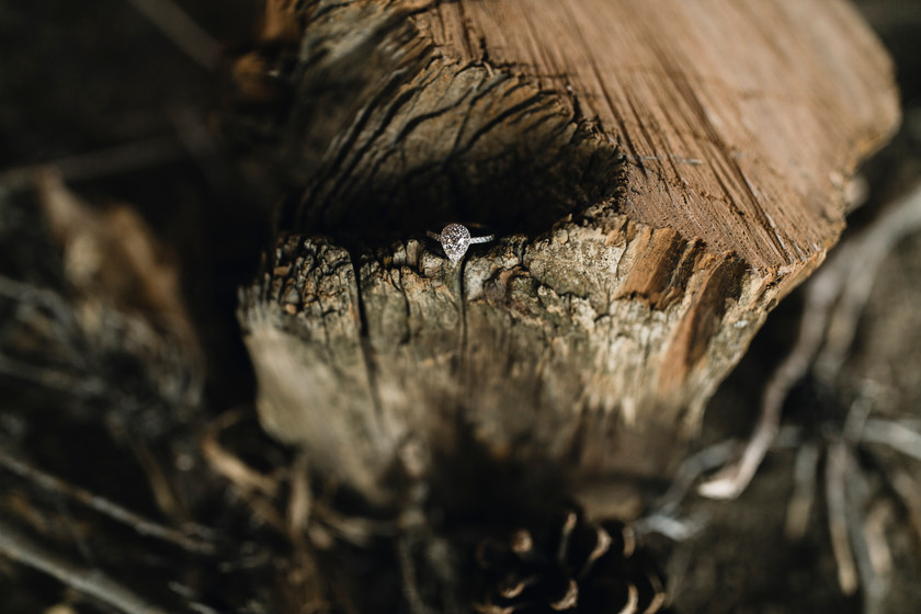 Ring wedding ring detail shot, Hidden amongst a fall and log creates a perfect spot for a perfect photograph.