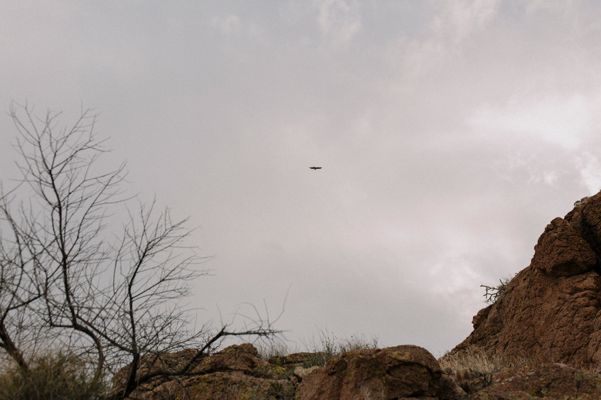 Flying crow above canyon During an elopement.