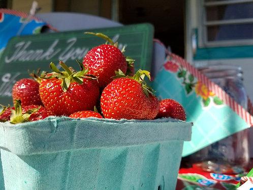 Pre-Picked Quart Strawberries