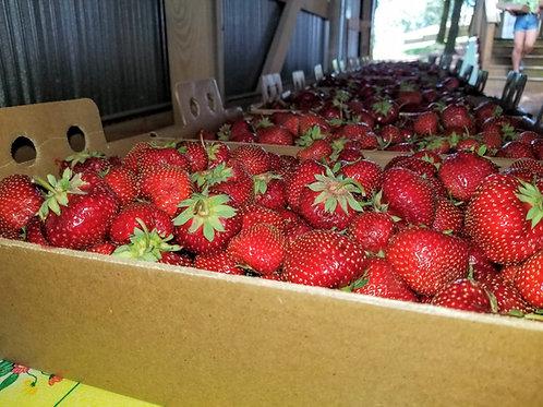 Pre-Picked Generous 10 lb. Strawberry Flat