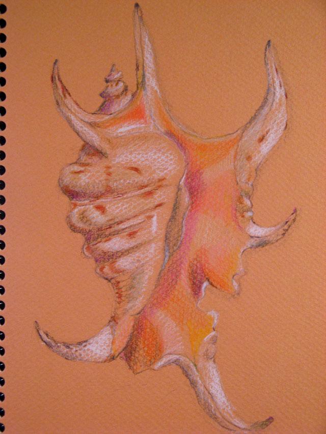 scorpion-shell-colored pencil