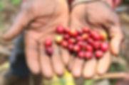 FT coffee-beans 2.jpg