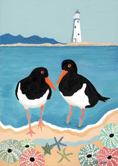Pied Oyster Catchers on the Nelson Haven
