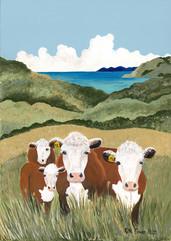 Arnold's Cows