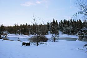 Winter-Forest2.jpg