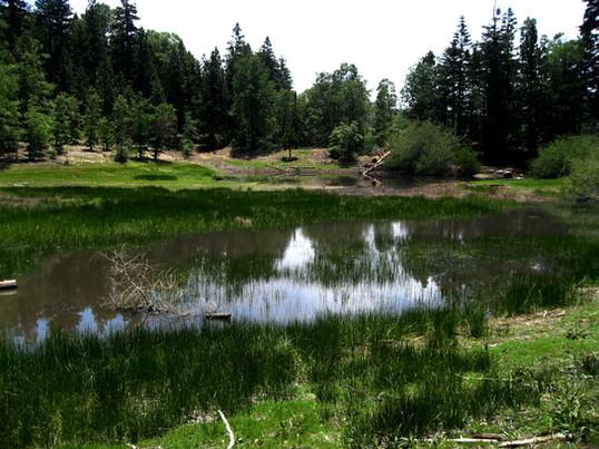 Green_lake.jpg