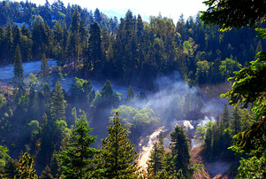 Smoke-in-the-woods.jpg