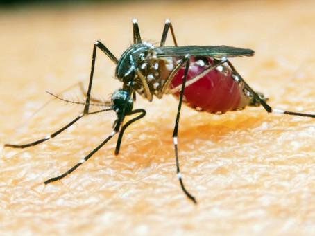 Malária é favorecida por aspectos geoambientais