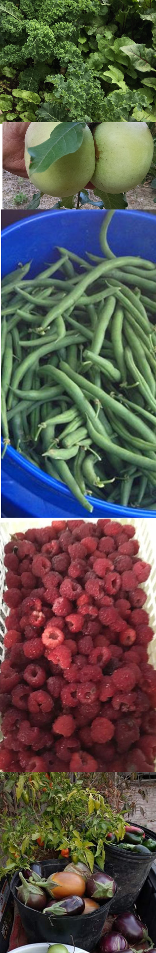 Mountain Brook Farm produce