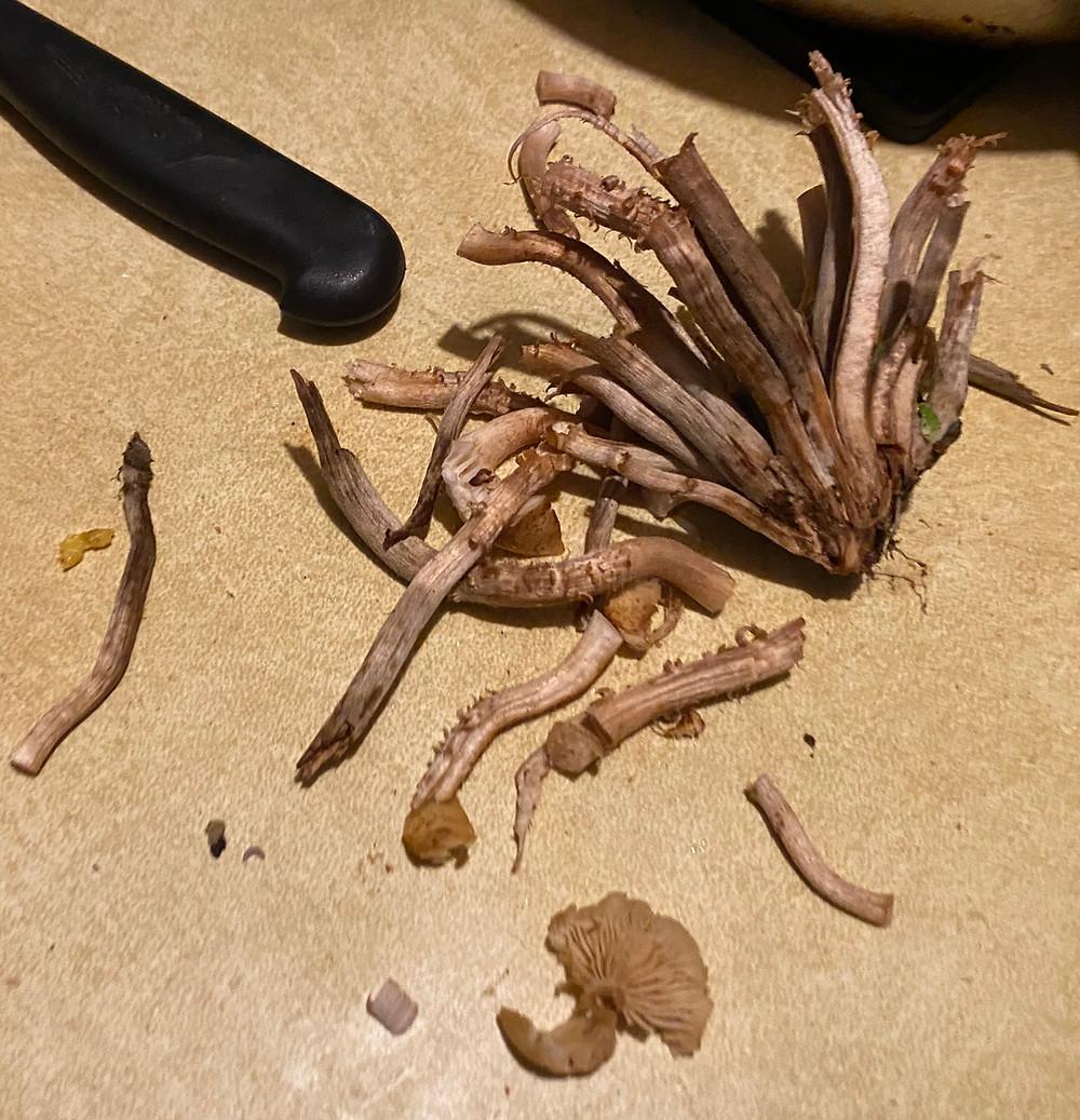 Ringless Honey Mushroom Stems.