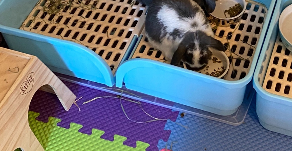 "Plastic lid placed under ""Oncpcare"" Super Large Rabbit Litter Box's"