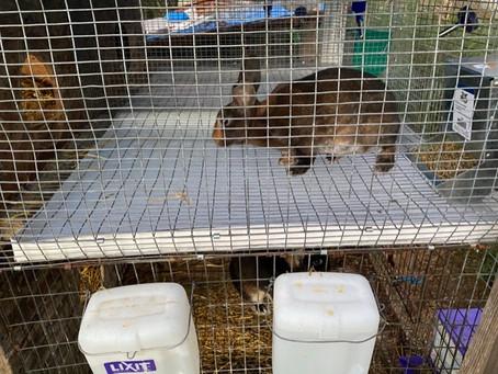 DIY Tray's for Rabbitry