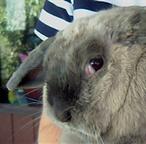A Rabbits Third Eye