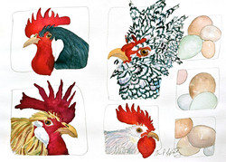 Four Roosters and Twelve Eggs