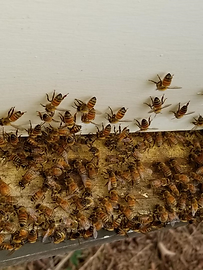 bees1.png