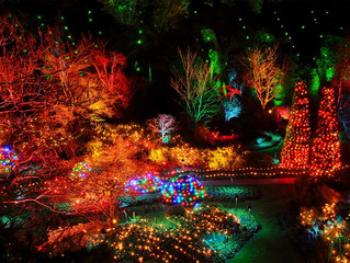 Lights of Wonder & the Magic of Christmas 2019!