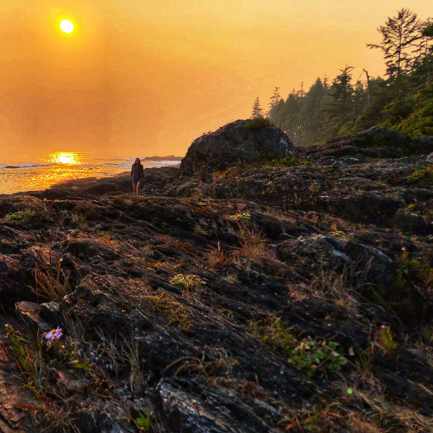 Botanical Beach is the crown-jewel of the Pacific Marine Circle Route touring the beaches and old-growth forests lining the Strait of Juan de Fuca.