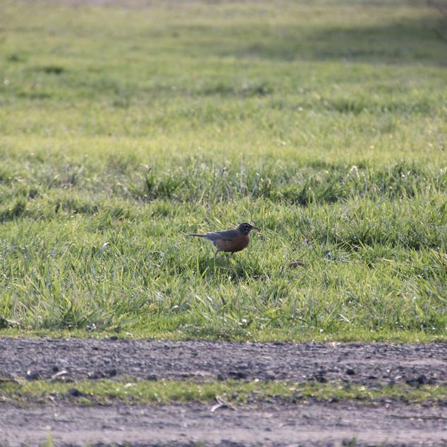 Running Birdie