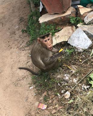 Mandi Mohalla, India