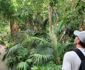 Jungle park in Tenerife