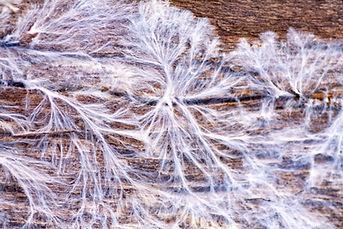 mycelium.jpg