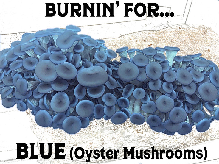 Burnin' for Blue (Oysters) Subscription Gift