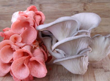 Oyster Mushroom Recipe Links