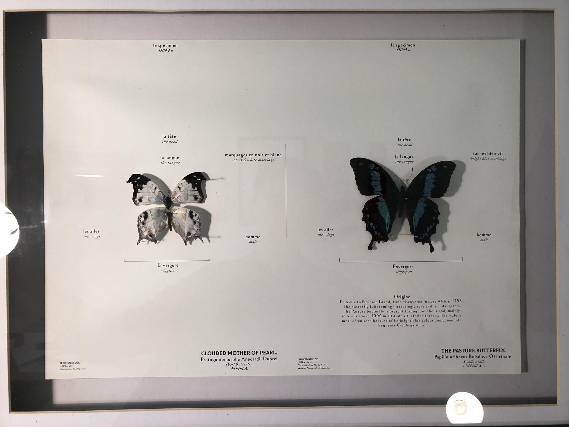 The Pasture Butterfly (Almanac II). Fischer, S. Unit 12. 2018