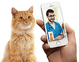telemedicine for pets.png