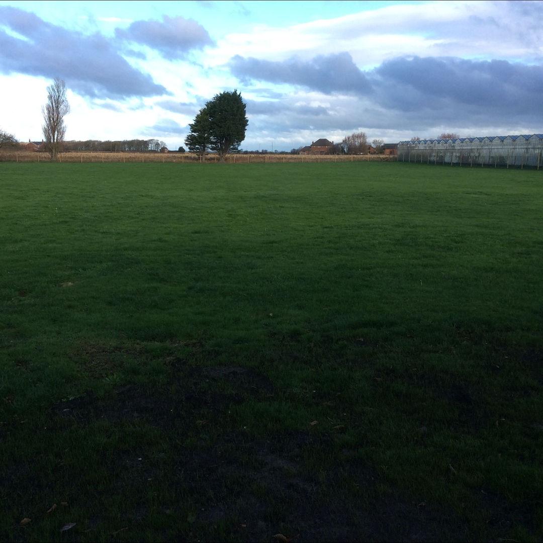 Laurel House Dog Walking Field