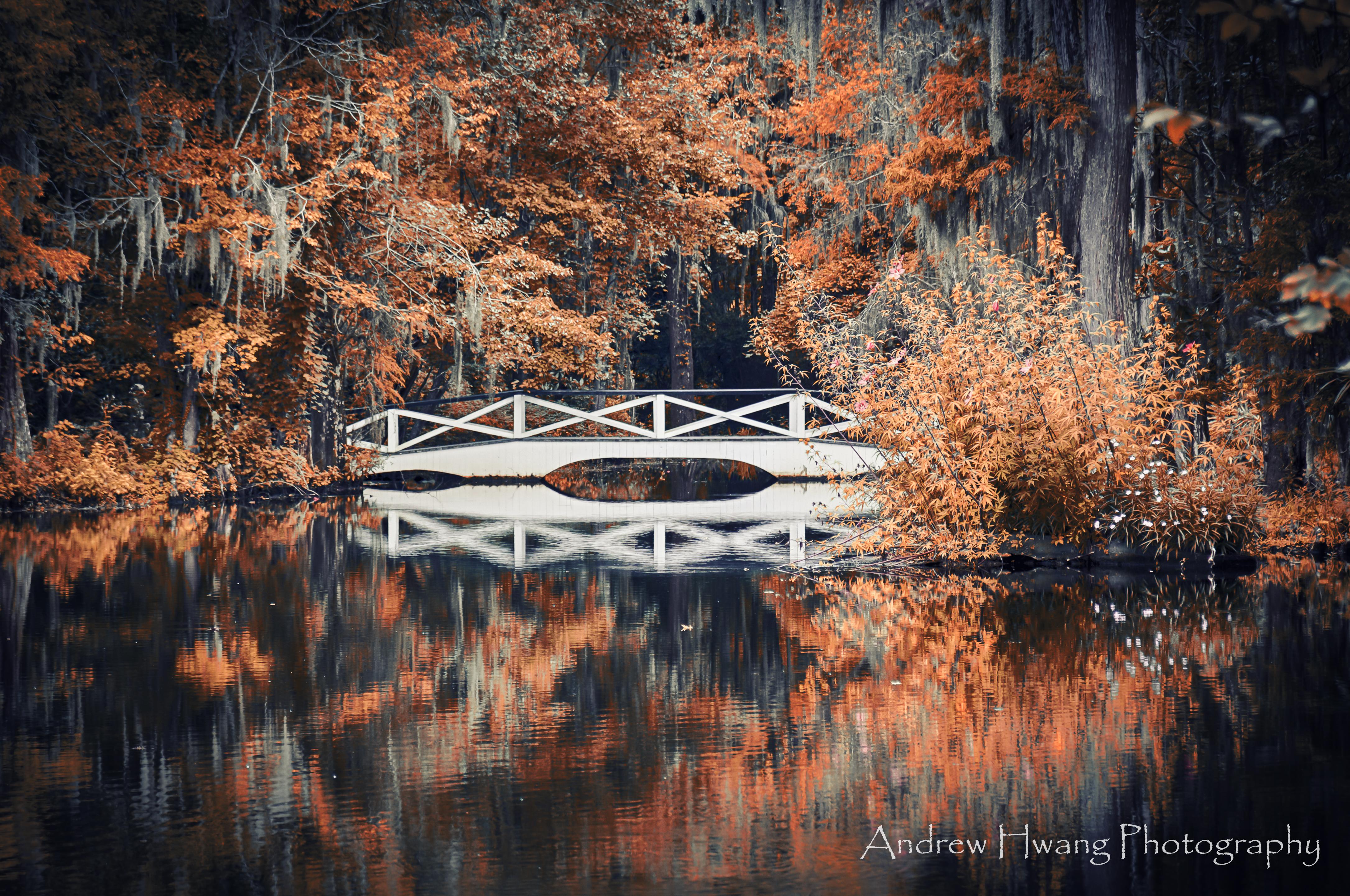Audubon Swamp Fall Bridge_2