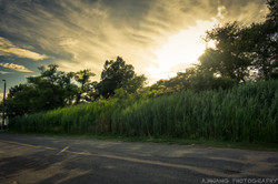 Road to Solomons Island