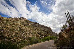 Sabino Canyon 8