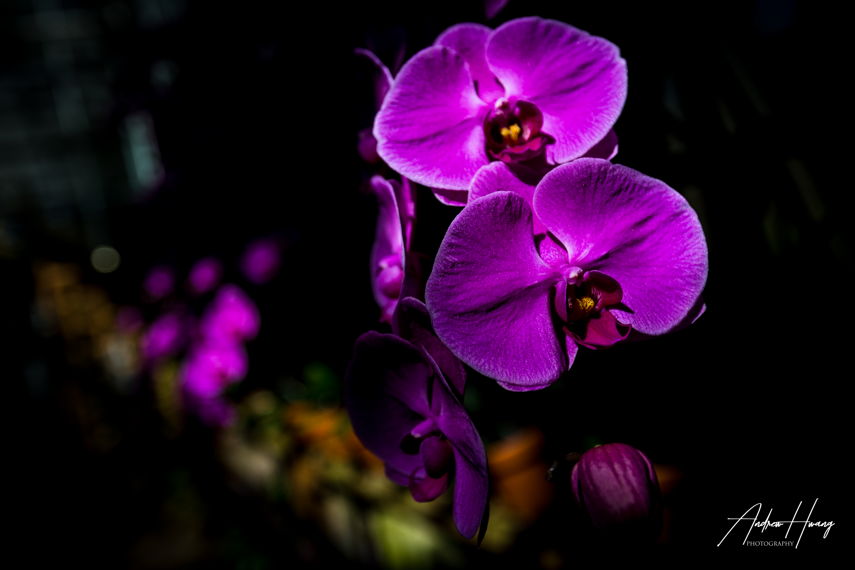 Atlanta Botanical Gardens Flowers