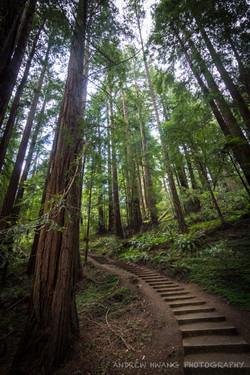 Muir Woods Stairs