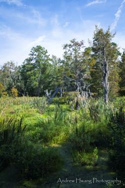 Audubon Swamp