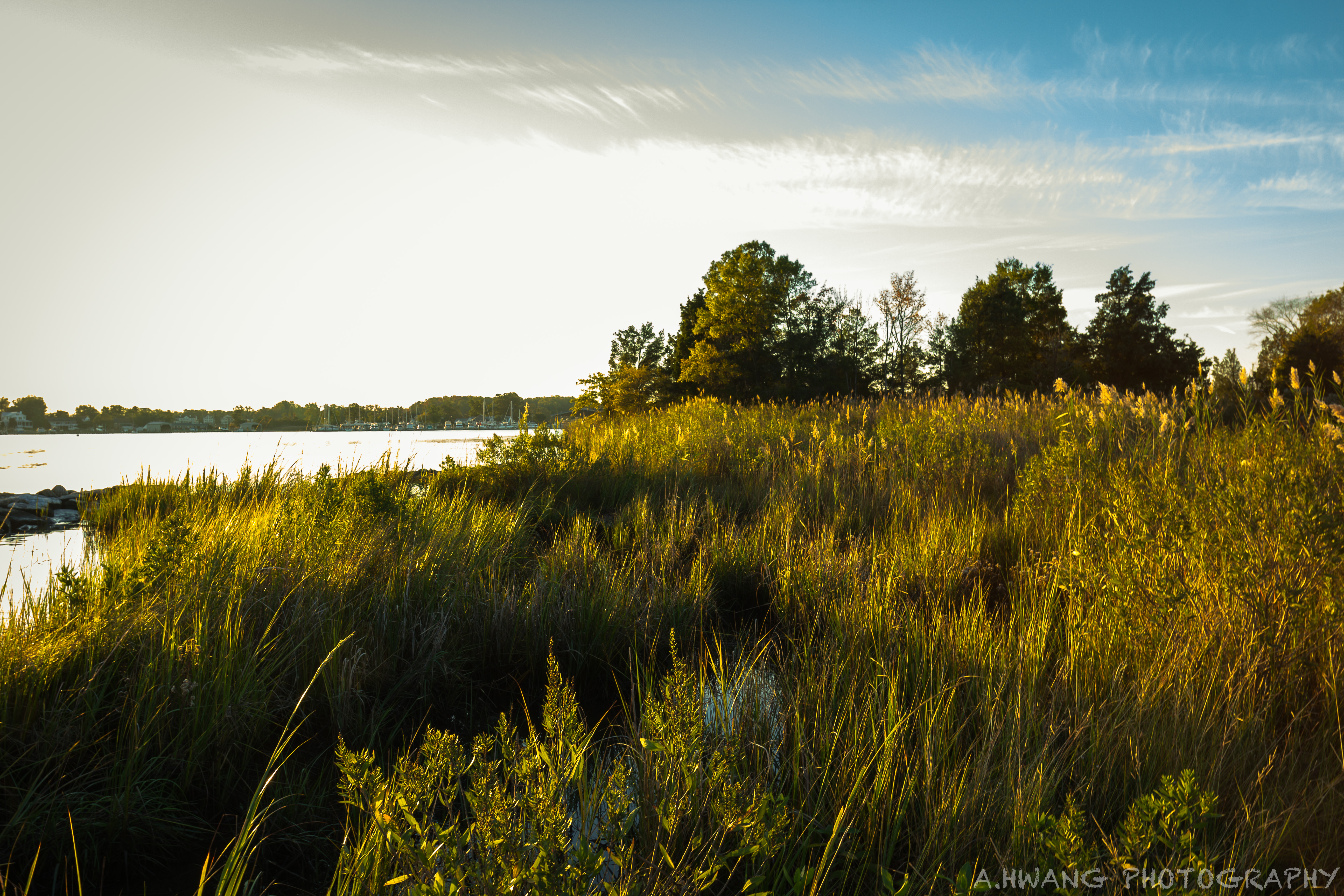 Marsh Selby on the Bay