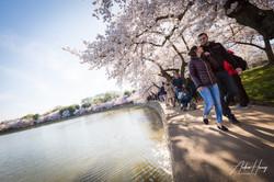 Cherry Blossom Festival Bend