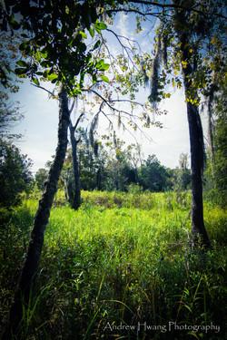Audubon Swamp_3
