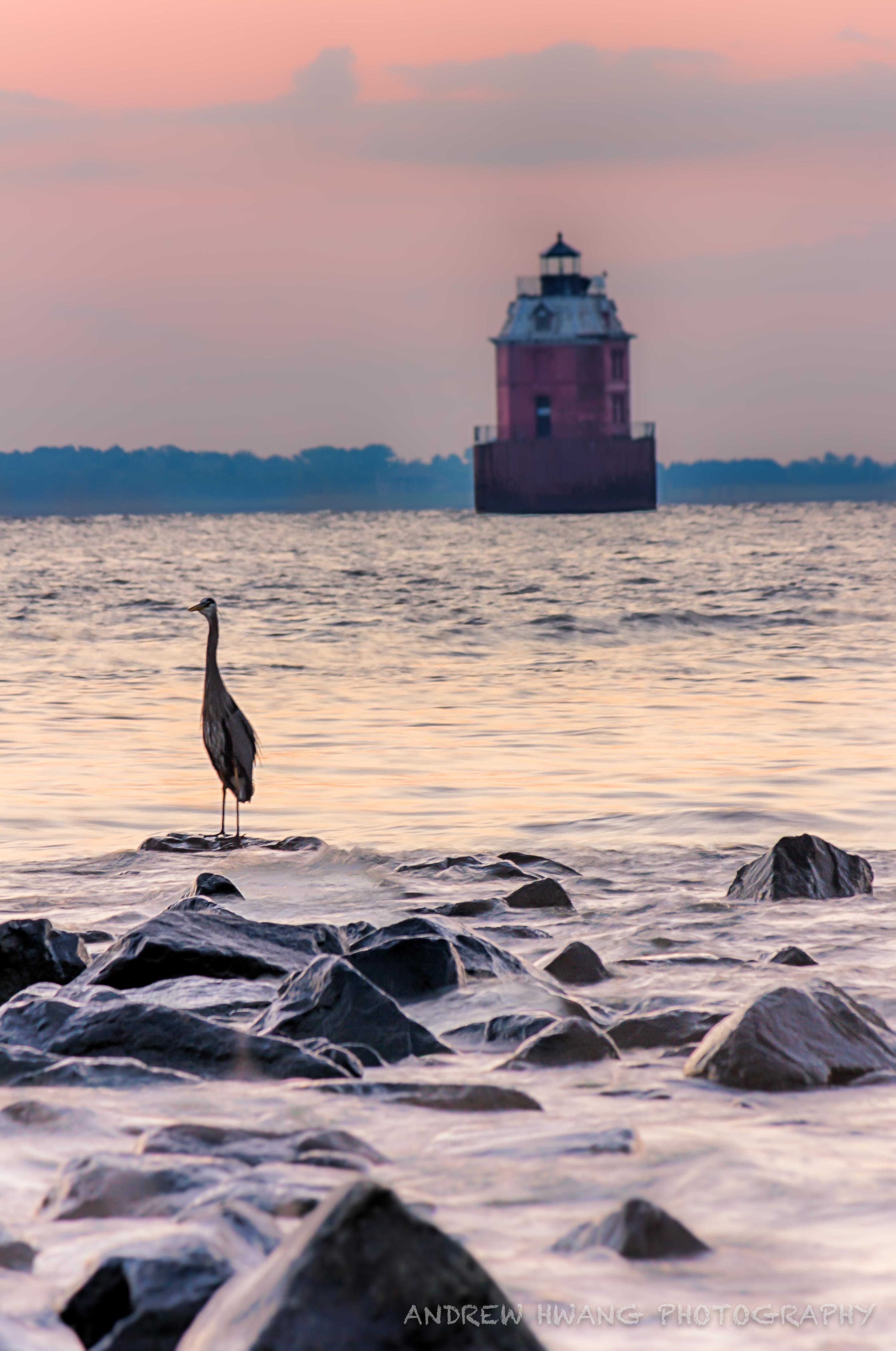 Sandy Point Sunrise Blue Heron