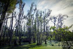 Audubon Swamp Marsh_2