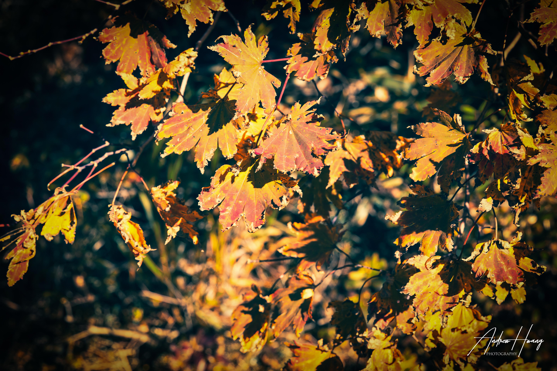 Hallasan Mountain Top Foliage