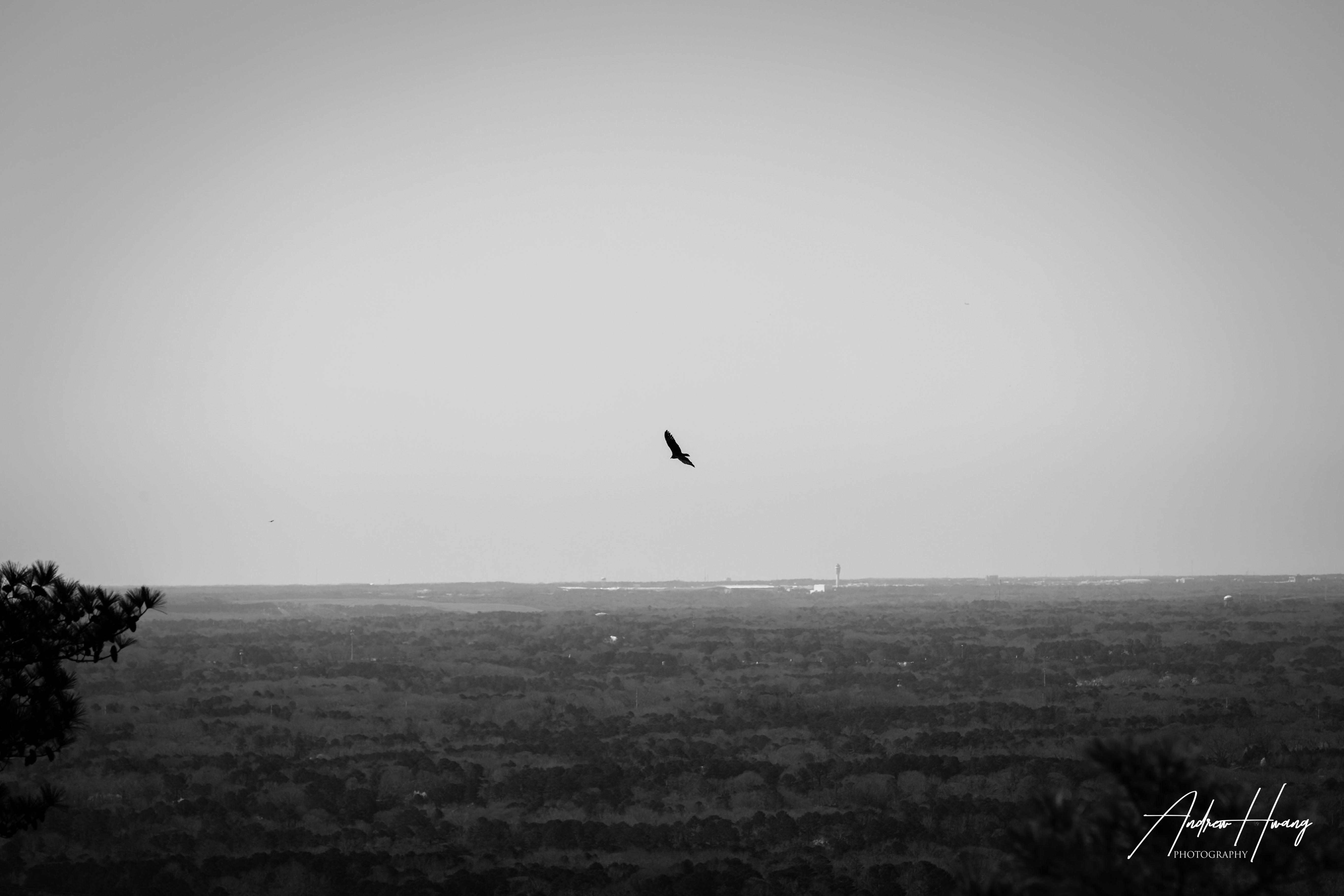 Stone Mountain - Hawks Circling