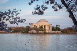 Jefferson Memorial Sunset - Cherry Bloss