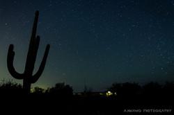 Suguaro Starry Night