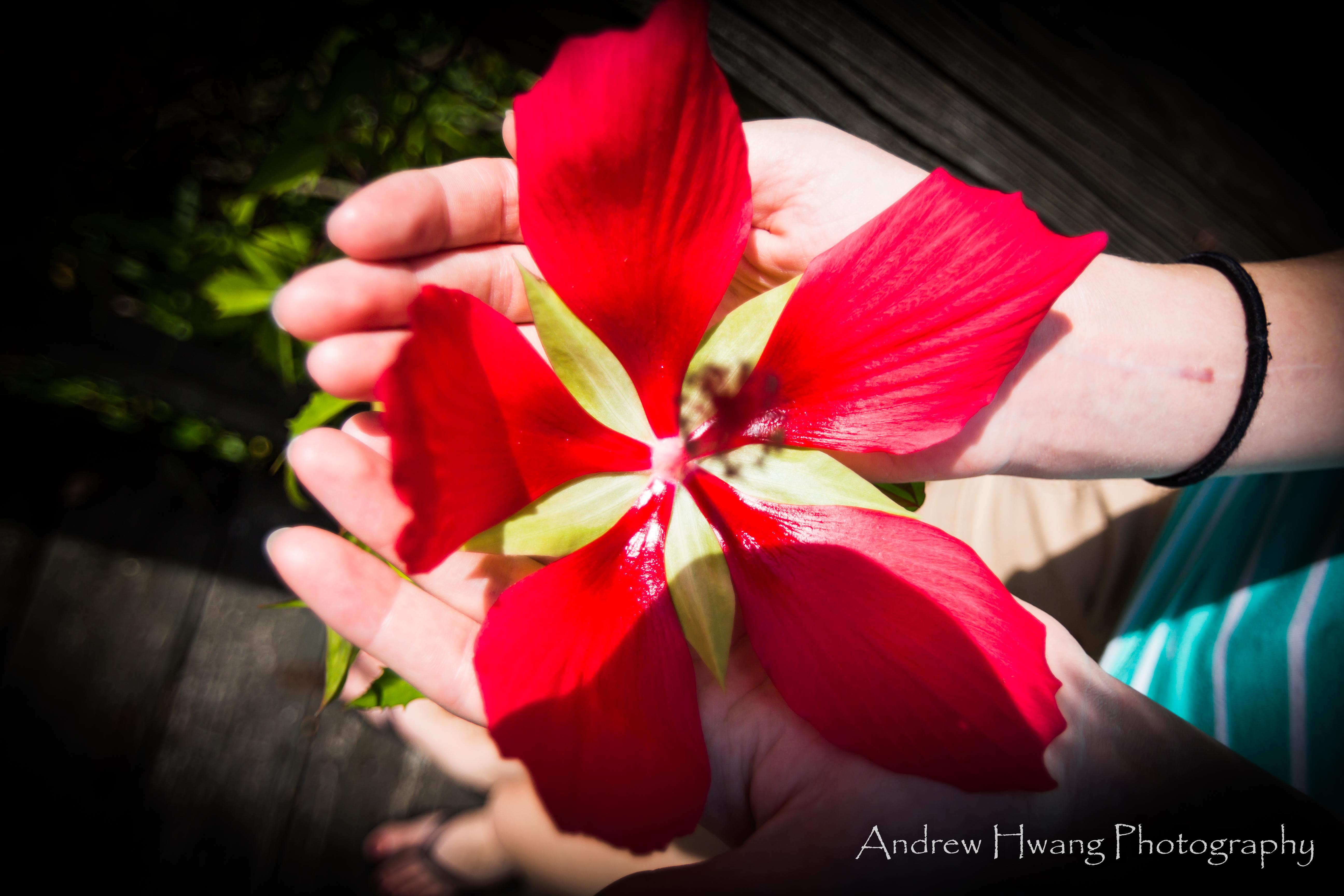 Audubon Swamp Flower
